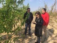 El Imida investiga nuevas variedades de melocotón y ciruela adaptadas a las condiciones de la región