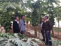El Imida trabaja en la adaptación y mejora varietal de cultivos tropicales con agricultores de Mazarrón