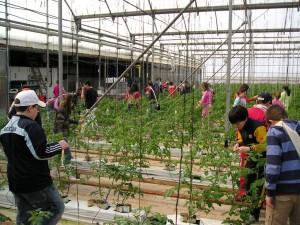 Un grupo de escolares aprende más sobre el cultivo del tomate.