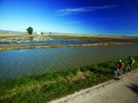 El programa Origins de Kellogg's da un nuevo impulso al cultivo sostenible del arroz en España