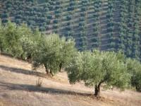 Andalucía convoca ayudas agroambientales y a la actividad agrícola en zonas con limitaciones naturales