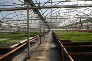 El semillero cuenta con un espacio de 10.000 metros cuadrados para sus plantas en cepellón.