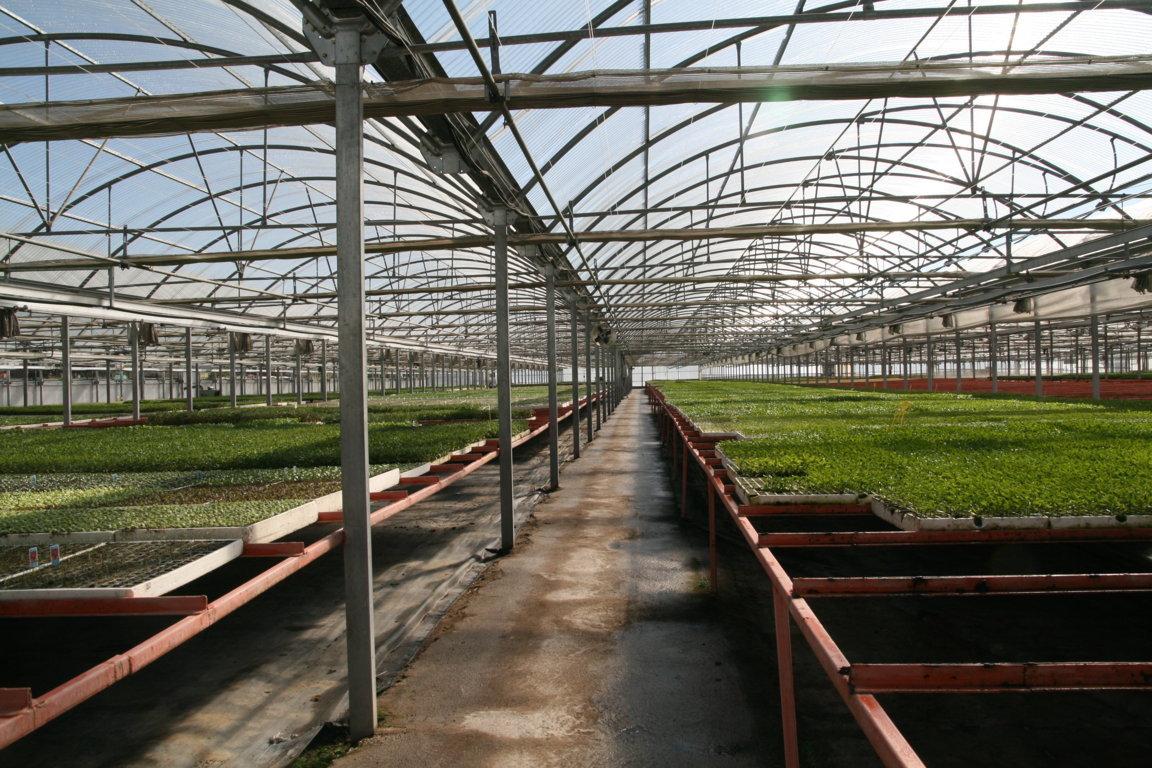 Semillero jm escolar metros cuadrados de for Plantas para invernadero