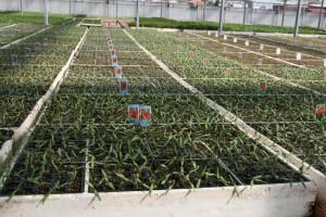 En JM Escolar puede encontrarse todo tipo de hortícolas.