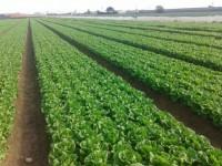 Hortamira apuesta por la gestión de cultivos desde el móvil