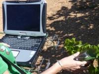 Sost-Wine, un proyecto para medir la humedad de las hojas de la vid de manera no invasiva