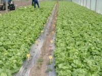 El Gobierno Vasco destina 12 millones para mejorar el desarrollo económico rural