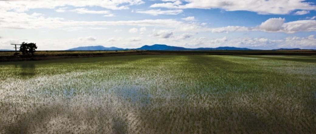 En defensa de la eficiencia del riego por aspersión de la superficie de arroz en Extremadura