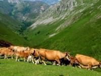 Asturias destina 26,6 M€ a la modernización y creación de empresas para jóvenes agricultores