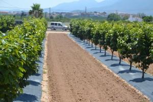 En total, en Sinyent trabajan con casi 500 variedades de 20 cultivos distintos.