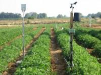 Desarrollo de un modelo integral de manejo eficiente del riego en tomate de industria