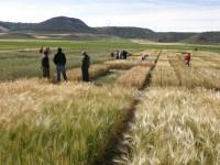 Ayudas para impulsar la creación de GO supra-autonómicos para proyectos de innovación agroalimentaria