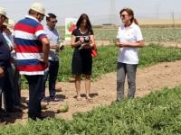 Syngenta evalúa con productores y compradores sus nuevas variedades de melón y sandía
