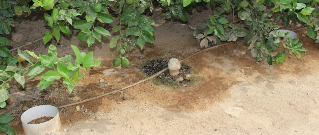 El IMIDA consigue ahorros de agua de entre un 15 y un 20% en el  manejo del riego en limonero