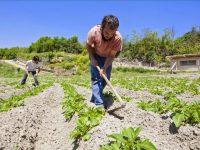 Murcia concede ayudas a 495 jóvenes agricultores para crear empresas e invertir en explotaciones