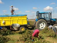 Castilla-La Mancha envía los cambios de su PDR 2014-2020 a la Comisión Europea