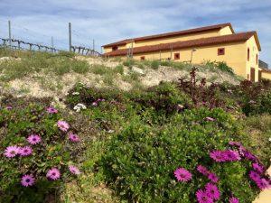de Bodegas Perfer, a las afueras de Uleila del Campo.