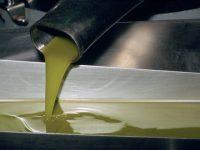 Aceite, del olivo a la botella en el mismo día