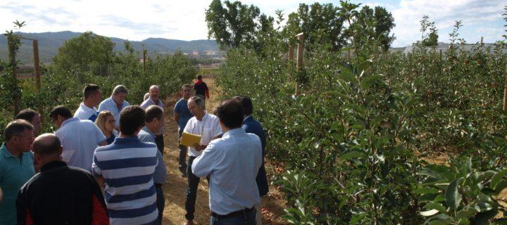 Murcia presenta nuevas variedades alternativas de manzano más precoces y productivas