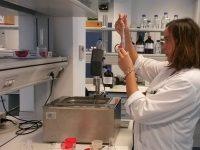 Investigadores del Ifapa desarrollan un método con ultrasonidos para extraer compuestos beneficiosos de la madera de poda de vid