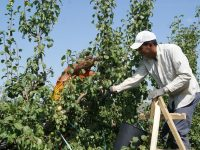 El Consell notifica las ayudas para la instalación a  210 jóvenes agricultores de Valencia
