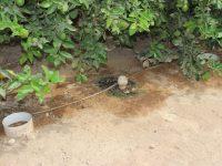 'Irriman', un proyecto europeo sobre manejo eficiente del agua de riego para una agricultura sostenible