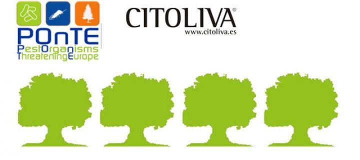 Citoliva presenta el proyecto europeo POnTE: 'Plagas amenazando Europa'