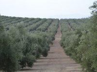 Andalucía contempla 1.262 beneficiarios de las ayudas a la modernización