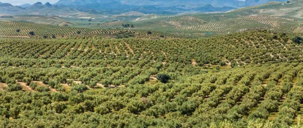 Desarrollan el primer sistema capaz de alertar y trazar la ruta de un fruto robado