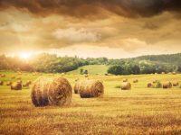 El Consejo de Ministros aprueba la distribución de 104,8 millones de euros para programas agrícolas, ganaderos y de desarrollo rural