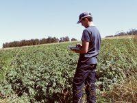 Canarias atenderá todos los expedientes de acceso de jóvenes al sector agrario