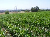 Proyecto Life+ Climagri, estrategias de mitigación y adaptación de cambio climático