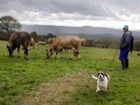 Ayudas para la incorporación de más de 600 jóvenes a la actividad agraria en Galicia