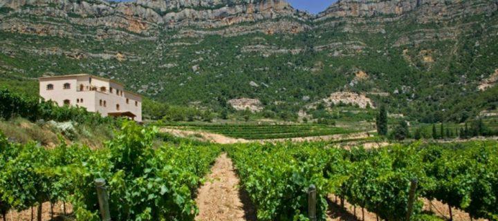 En busca de un modelo de producción vitivinícola sostenible