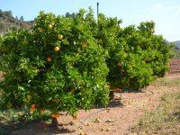 La Comunidad Valenciana recupera con 15 millones de euros las ayudas a inversiones en mejora de las explotaciones agrarias
