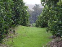 WWF y Edeka se unen en un proyecto para mejorar la sostenibilidad del cultivo de los cítricos