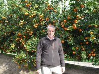 Hacia la optimización de la fertirrigación en los cítricos de Huelva
