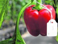 Nuevos tomates y pimientos en condiciones de sequía y alta salinidad