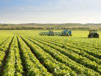 WeLaser, la solución tecnológica que pretende acabar con las malas hierbassin tratamientos químicos
