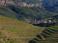 Cataluña concede 10 M€ para mejorar la competitividad de las explotaciones agrarias