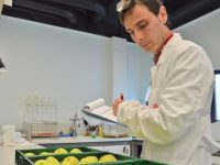 El IRTA desarrolla dos nuevos métodos para predecir el bitter pit en manzana