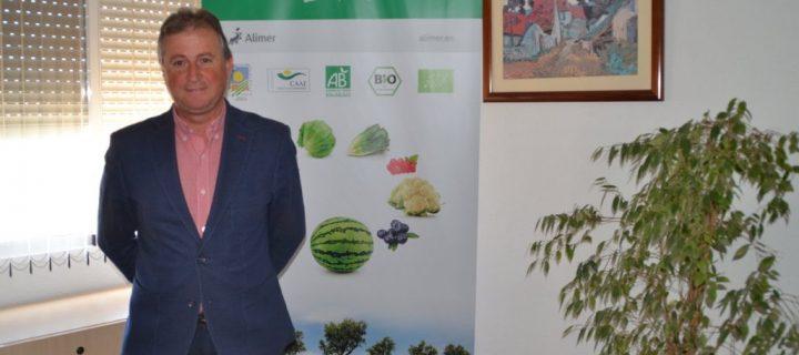 Brócoli, la hortaliza estrella en Murcia