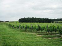 Construcción de mapas 3D de viñedos desde tierra