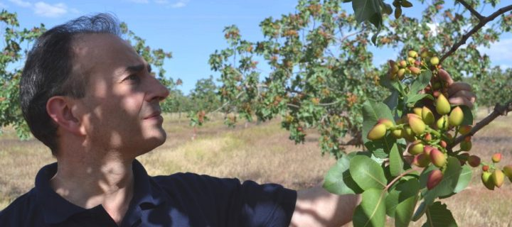 Diversificación y apuesta por cultivos emergentes para una mayor rentabilidad de la explotación