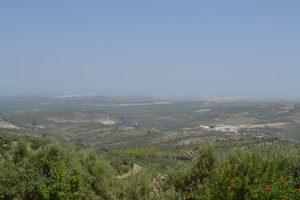 Las 50 ha de Manuel se ubican entre el paraje Las Cumbres y la zona de campiña, lo que supone unos 300 metros de altura de diferencia.