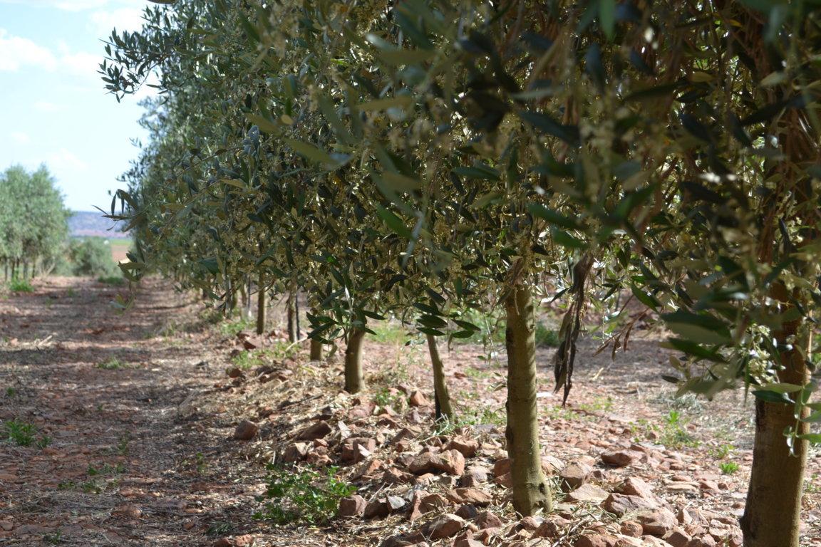 Diversificaci n y apuesta por cultivos emergentes para una - Sistema riego goteo ...