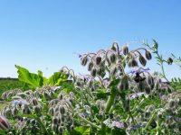 Syngenta y Apis impulsan la agricultura sostenible en Extremadura