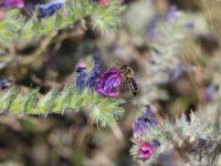 Surinver y Greenyard se unen a la iniciativa de Syngenta para la extensión de márgenes de biodiversidad