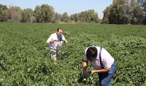 Cicytex participa en el proyecto Fertinnowa para ofrecer soluciones innovadoras en fertirrigación