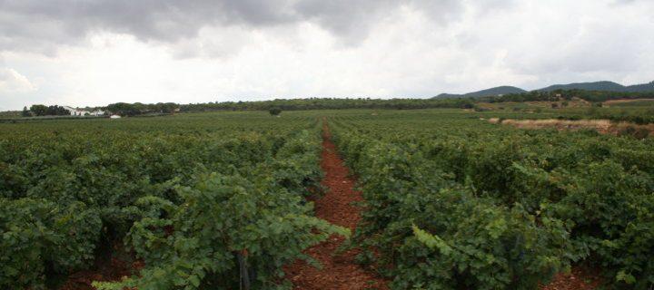 La tecnología robótica permitirá al viñedo español optimizar su competitividad y sostenibilidad